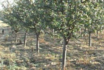 Prednost jesenje sadnje voća