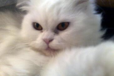Mačka žrtva komšijske svađe