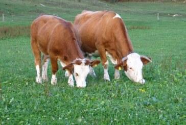 Podsticaji u poljoprivredi