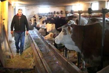 Neće biti nestašice mleka