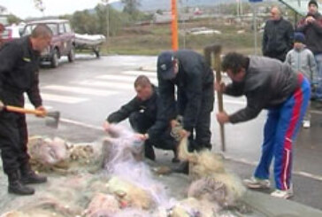 Presečene mreže ribokradica