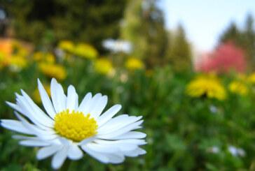 Stiglo proleće, a u nedelju 31.marta letnje računanje vremena