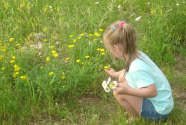 Počinje sezona krpelja: Opasnost vreba iz trave