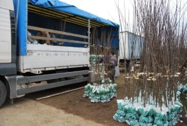 Vrednost izvoza kalemova do marta – milion i po evra