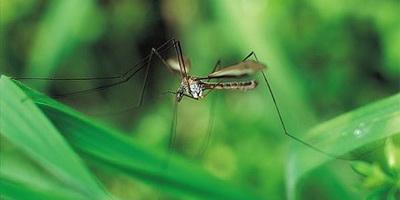 Akcija zaprašivanja larvi komaraca