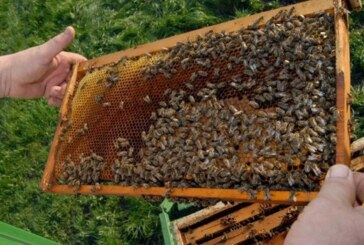 Subvencije za pčelararstvo