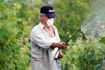 Prskanje vinograda protiv pepelnice i plamenjače