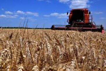 Poljoprivrednici nisu previše zainteresovani za prodaju pšenice (VIDEO)