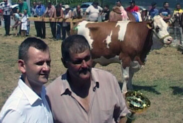 Veliki Šiljegovac: Održan 6. sajam goveda simentalske rase (VIDEO)