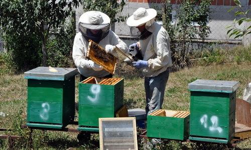 Podnošenje zahteva pčelara za subvencije do 31. avgusta