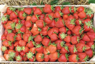 Kriterijumi za podsticaje podrške investicijama za subvencionisanje u poljoprivredi (VIDEO)