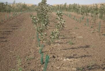 Subvencije za podizanje višegodišnjih zasada voća (VIDEO)