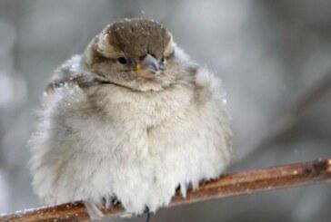 Od ponedeljka prava zima – sneg i nula stepeni!