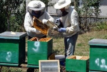 I kruševački pčelari protiv GMO