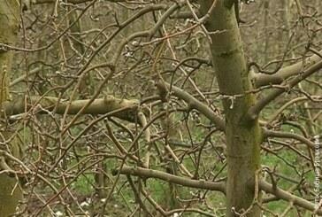 Mraz dobrodošao za voćke (VIDEO)
