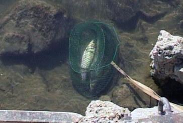 Akcija kontrole ribolova (VIDEO)