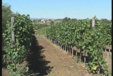 Donet Pravilnik o kreditima za poljoprivrednike (VIDEO)