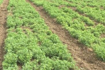 Semena lucerke ima dovoljno na tržištu (VIDEO)