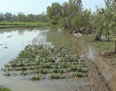 Pričinjena šteta od poplava oko 90 miliona dinara (VIDEO)