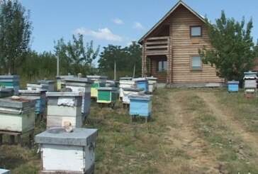 Prijave za pčelarske subvencije do 30. aprila (VIDEO)