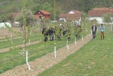 Do unapređenja poljoprivredne proizvodnje preko udruženja (VIDEO)