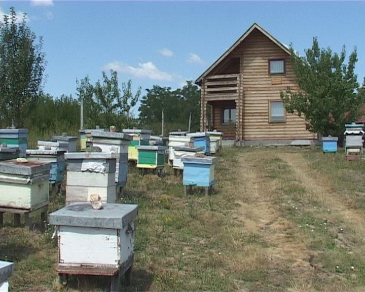 Vremenske neprilike negativno uticale na pčelinja društva