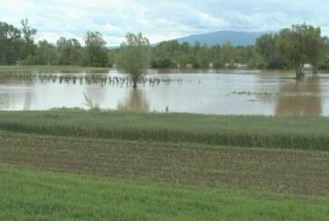 Poplave uništile lozne kalemove