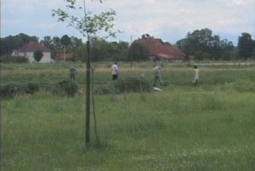 Trenutne učestale padavine ne prijaju žetvi strnih žita, pšenice i ječma (VIDEO)