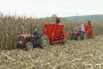 Rekordan rod kukuruza, problem može biti skladištenje (VIDEO)