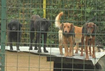 Proširenje kapaciteta za smeštaj napuštenih pasa kod deponije u Srnju