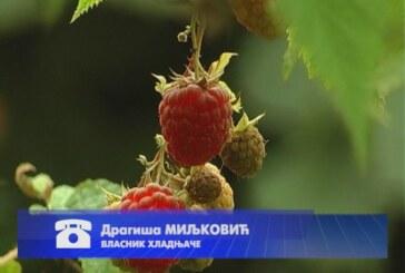 Otkup jagodičastog voća u punom jeku
