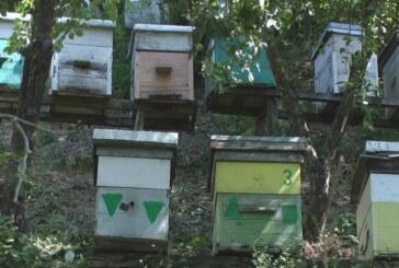 Pripreme za Naučni simpozijum o pčelarstvu u Srbiji u Kruševcu