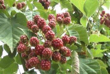 Postoji li još uvek problem čuvanja voća u hladnjačama
