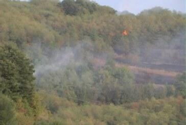 Još jedan apel –  savesnim ponašanjem izbegnimo šumske požare