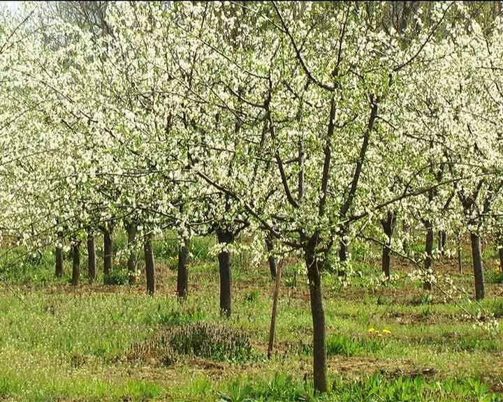 Grad Kruševac će subvencionisati više programa u oblasti poljoprivrede.