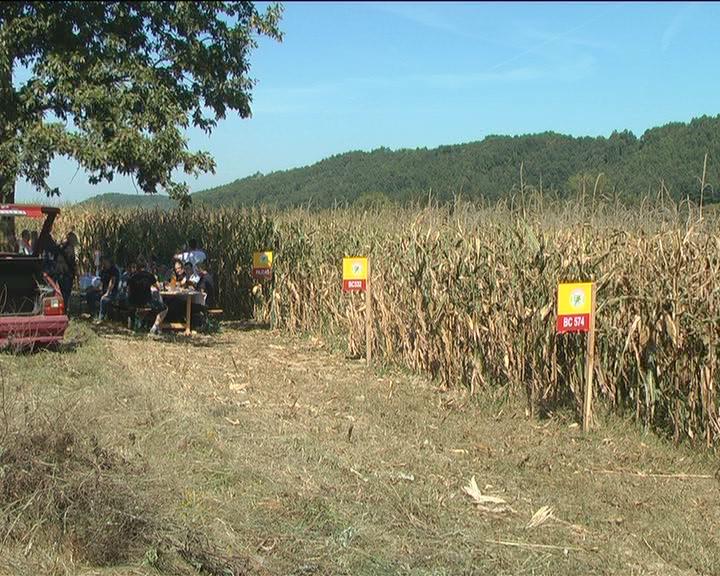 Dani polja kukuruza na oglednom dobru Dobriše Agatonovića u Dvoranu