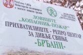 Vukovi još jednom izmakli lovcima na padinama Kopaonika