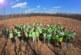 Hektar šume za četiri miliona digitalnih transakcija