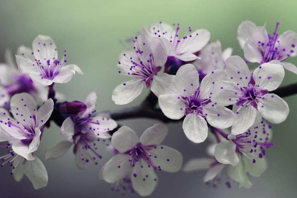 Prva sedmica aprila – prava prolećna.