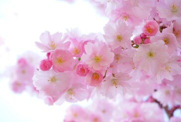 Stiže nam pravo proleće, iz dana u dan sve toplije