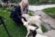 U Beloj Vodi, u domaćinstvu Miroslava Todorovića, ovca ojagnjila četvoro jagnjadi