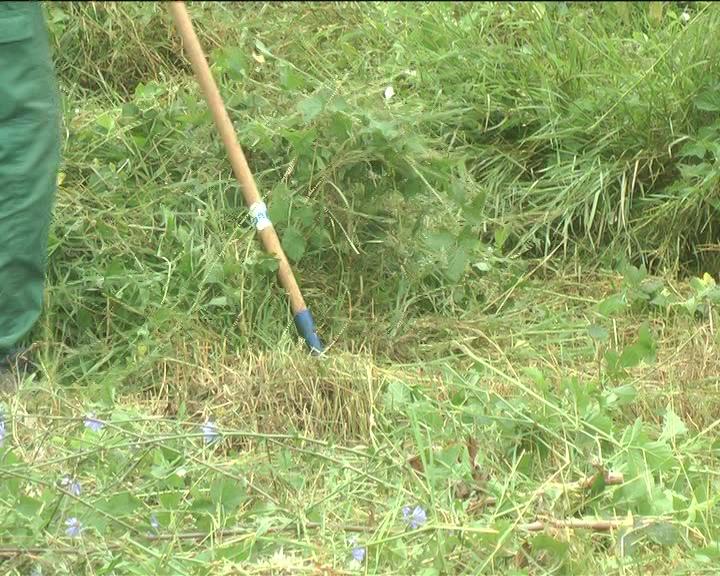 JKP Kruševac krenulo sa akcijom košenja i sređivanja neuređenih javnih zelenih površina
