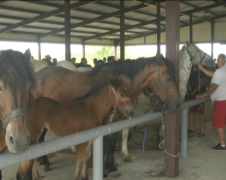 Izložba konja u Kruševcu – po prvi put u Rasinskom okrugu
