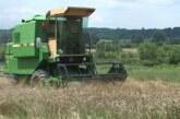 Zbog suše znatno umanjen prinos pšenice