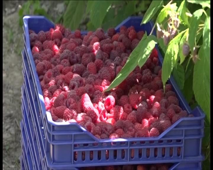 Na stranom tržištu sve više organske hrane