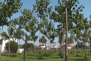 Klimatske promene i zatravljivanje međurednog prostora u zasadima voća i vinogradima