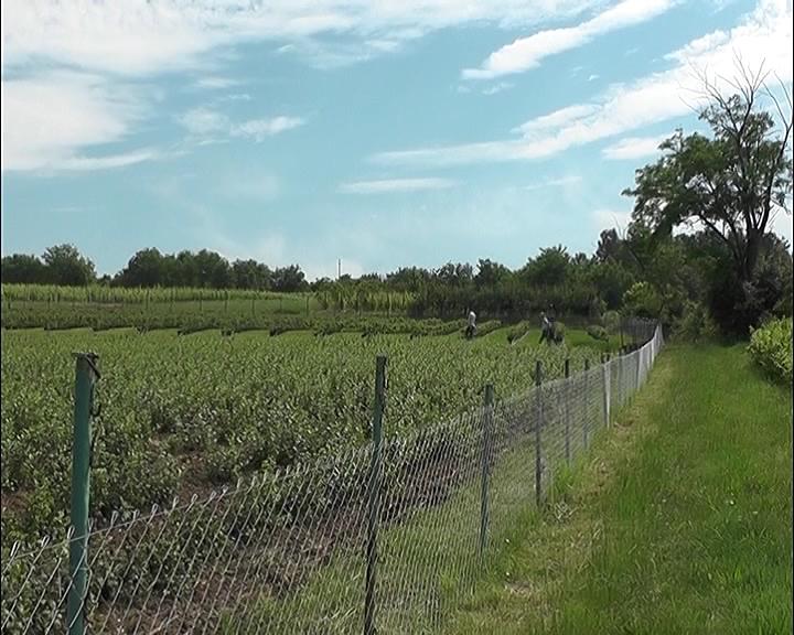 Vreme je za pripremu zemljišta za nove voćne zasade