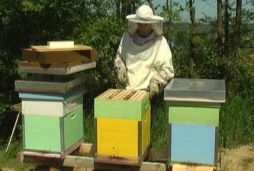 Pčelari će imati priliku da dobiju sredstva za setvu medonosnog industrijskog bilja