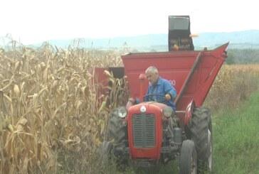 U kruševačkom kraju u jeku berba kukuruza