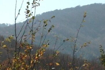 Na prostoru kojim gazduje Šumsko gazdinstvo Rasina Kruševac u državnim šumama bespravno se poseče oko 200 kubika godišnje